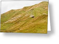 Large Flock Of Herded Sheep On A Steep Hillside Greeting Card