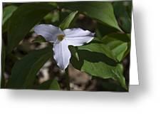 Large-flower Trillium Dspf277 Greeting Card