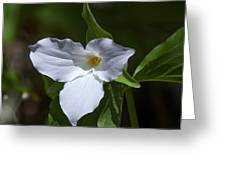 Large-flower Trillium Dspf279 Greeting Card