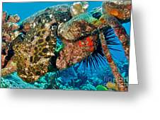 Large Frogfish Greeting Card