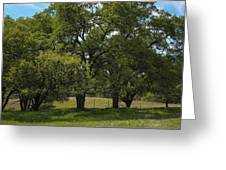 Large Green Oak Trees Greeting Card