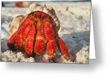 Large Hermit Crab On The Beach Greeting Card