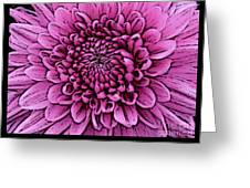 Large Pink Dahlia 2 Greeting Card