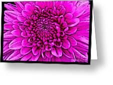 Large Pink Dahlia Retro Style Greeting Card