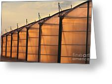 Large Scale Industrial Greenhouse Lit By Sunet Greeting Card