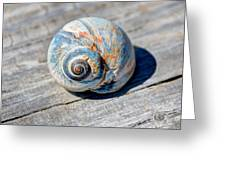 Large Snail Shell Greeting Card