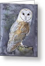 Large White Barn Owl Greeting Card
