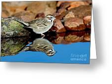 Lark Sparrow Chondestes Grammacus Greeting Card