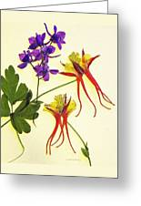 Larkspur And Columbine Greeting Card
