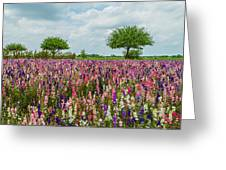Larkspur Fields Forever Greeting Card
