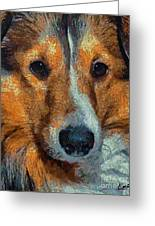 Lassie - Rough Collie Greeting Card