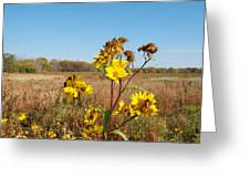 Last Blooms Before Fall Greeting Card