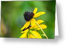Last Blooms Of Summer Greeting Card