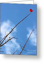 Last Leaf Standing Greeting Card