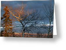 Last Light Last Leaves Greeting Card