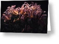 Last Light Lillies Greeting Card