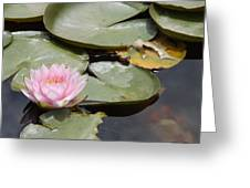 Last Lily Of Fall Greeting Card