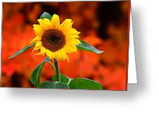 Last Sunflower Horizontal Greeting Card