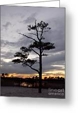 Last Tree Standing Greeting Card