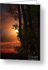 Late August Sunset Greeting Card