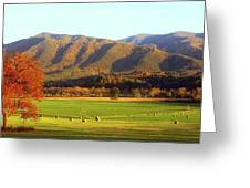 Late Autumn Afternoon In Cades Cove Greeting Card