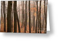 Late Autumn Beech Greeting Card