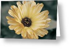 Late Bloomer Greeting Card