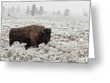 Late Fall Yellowstone Greeting Card