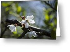 Late Spring Blossom Greeting Card