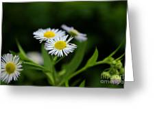 Late Summer Bloom Greeting Card