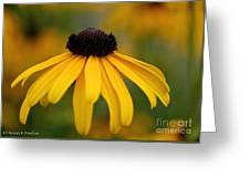 Late Summer Blooms Greeting Card