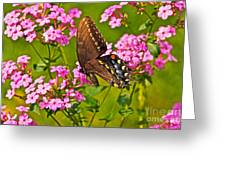Late Summer Color Greeting Card