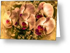 Late Summer Orchids Greeting Card by Jill Balsam