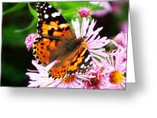 Late Summer Painted Lady Greeting Card