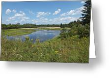 Late Summer Pond Greeting Card