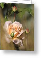 Late Summer Rose Greeting Card