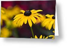 Late Summer Rudbeckia  Greeting Card