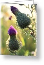 Late Summer Thistle - 2 Greeting Card