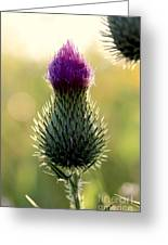 Late Summer Thistle Greeting Card