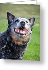 Laughing Dog Greeting Card