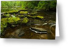 Laughing Fish River Greeting Card