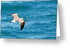 Laughing Gull 003 Greeting Card