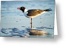 Laughing Gull On The Beach At Fort Clinch State Park Florida  Greeting Card
