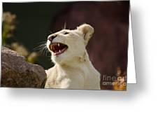 Laughing Lioness Greeting Card
