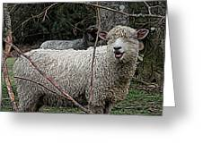 Laughing Ram Greeting Card