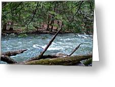 Laurel Hill Creek Hemlock Overlook Greeting Card