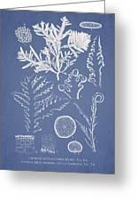 Laurencia Concinna And Hypnea Musciformis Greeting Card