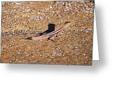 Lava Lizard Greeting Card
