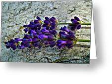Lavender On White Stone Greeting Card
