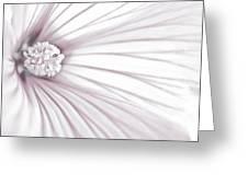 Lavatera Flower Stamen Macro  Greeting Card